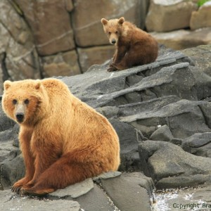 mom and spring cub, grizzly