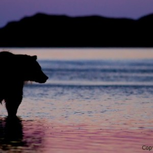 natural habitat adventures photo tours, brad josephs, NHA, alaska, images, image