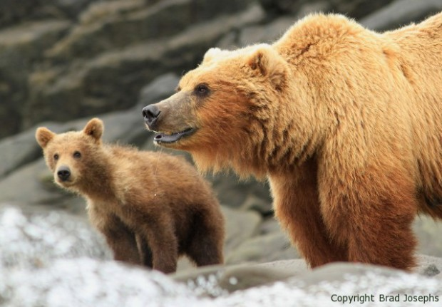 great bear stakeout, discovery channel
